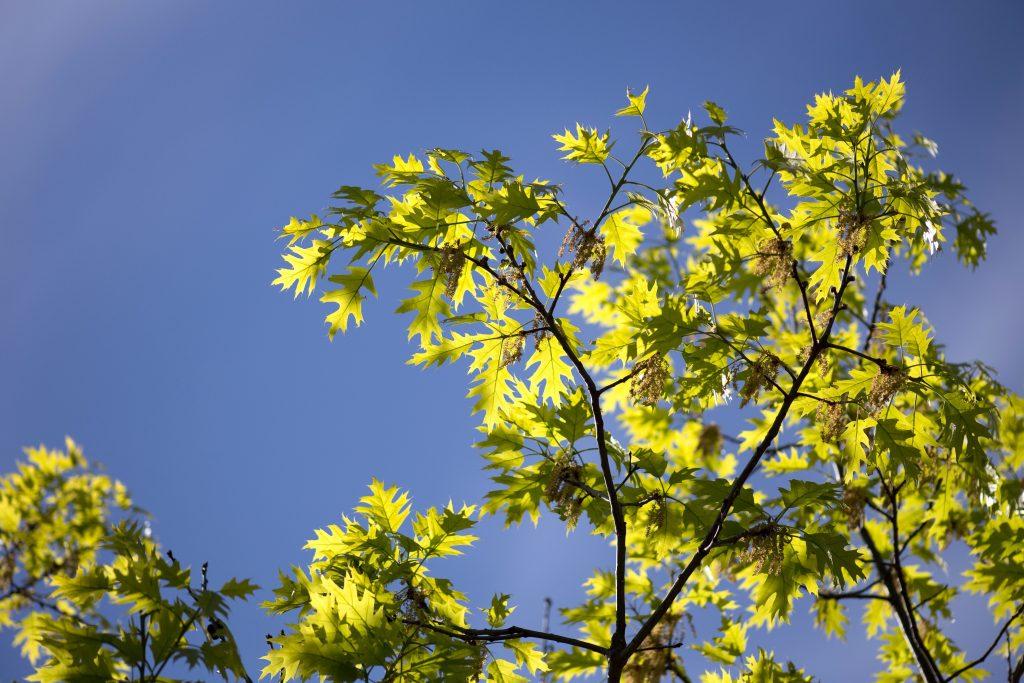 tree, nature, leaves, trees, sky, summer
