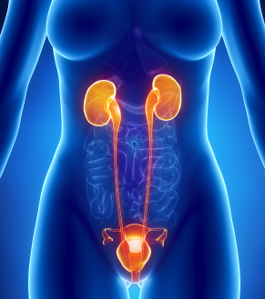 l-infection-urinaire-est-plus-frequente-chez-les-femmes_8d4a802734725ef4cdb7bd03cd2af9db5e19144e