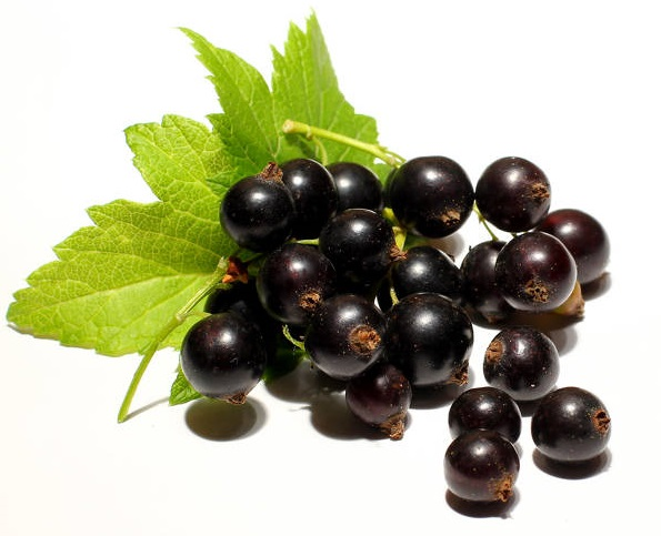 Free picture (Berries of black currant isolated) from https://torange.biz/berries-black-currant-isolated-33157